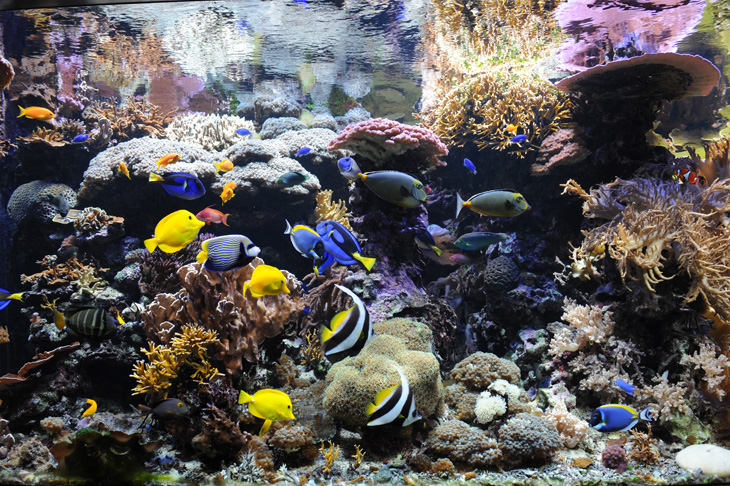 acquario di barriera corallina del Museo di Scienze Naturali dell'Alto Adige a Bolzano