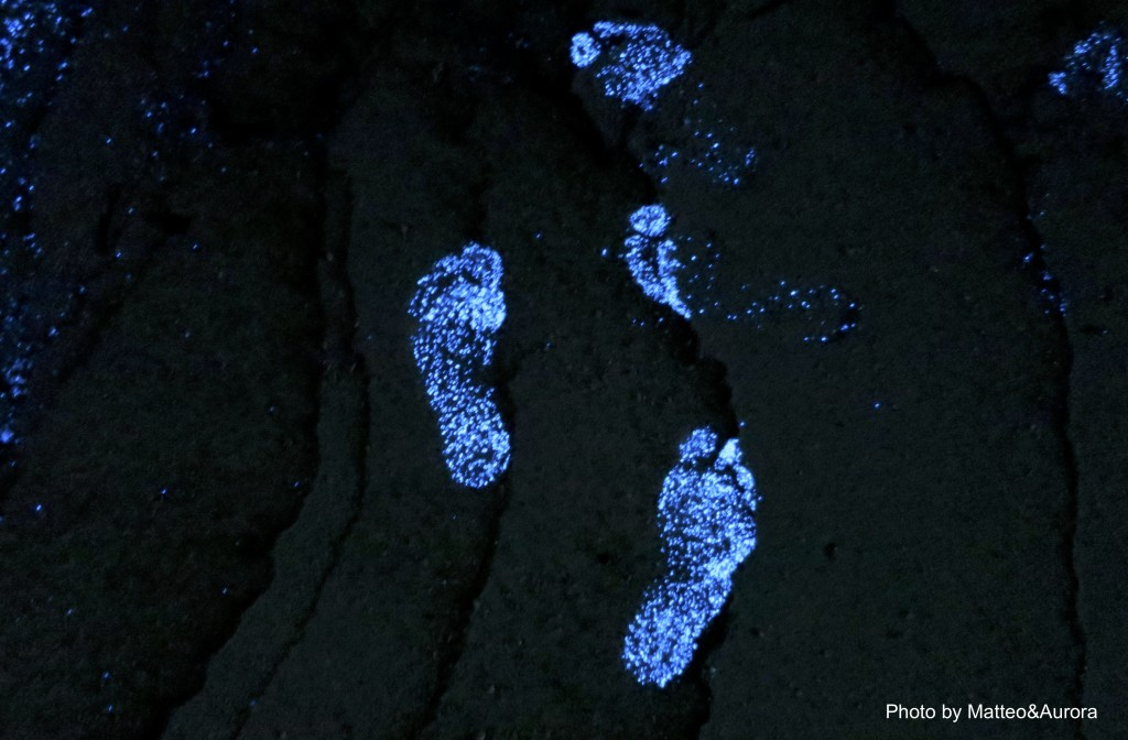 bioluminescenza alle maldive