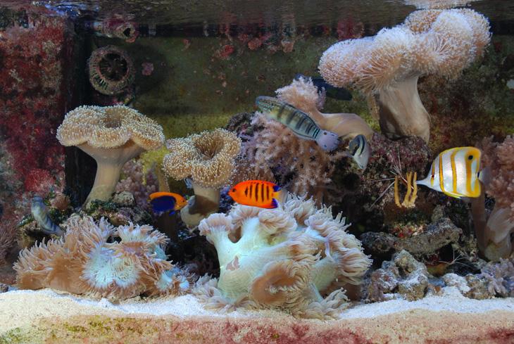 acquario di barriera corallina del Museo di Scienze Naturali dell'Alto Adige a Bolzano vasca quarantena