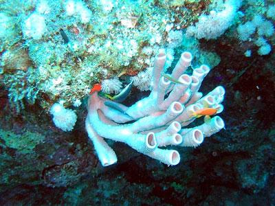 porifera sponge spugna