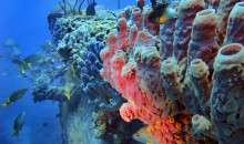 L'importanza delle spugne nel reef