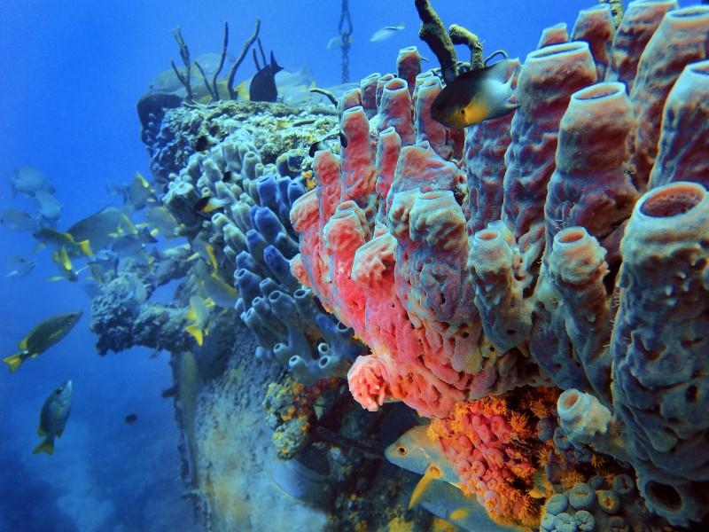 sponges reef