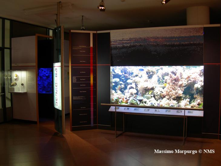 Acq marini museo