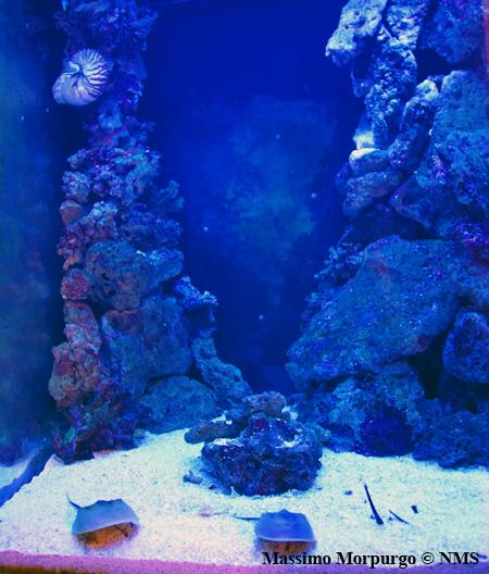 Acquario Nautilus 2013 copy