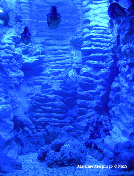 Acquario Nautilus copy