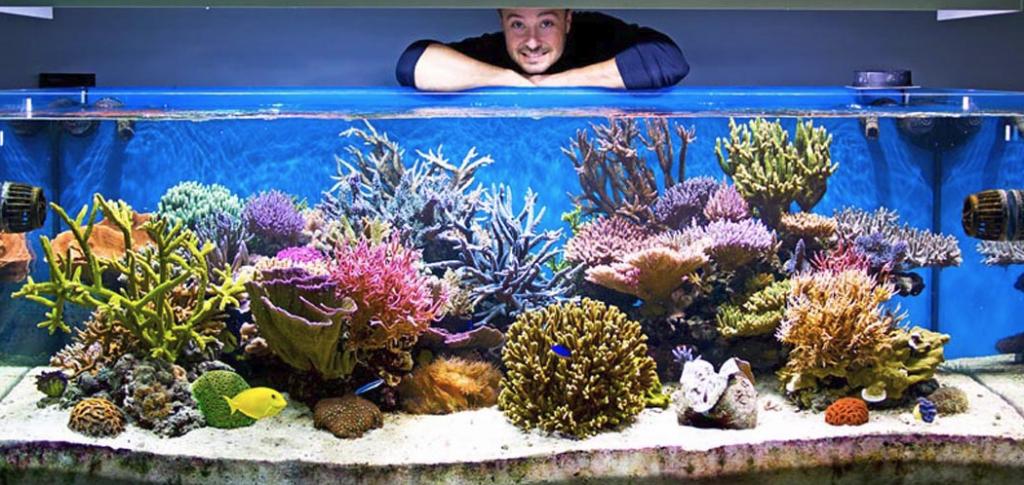 acquario marino di paolo piccinelli