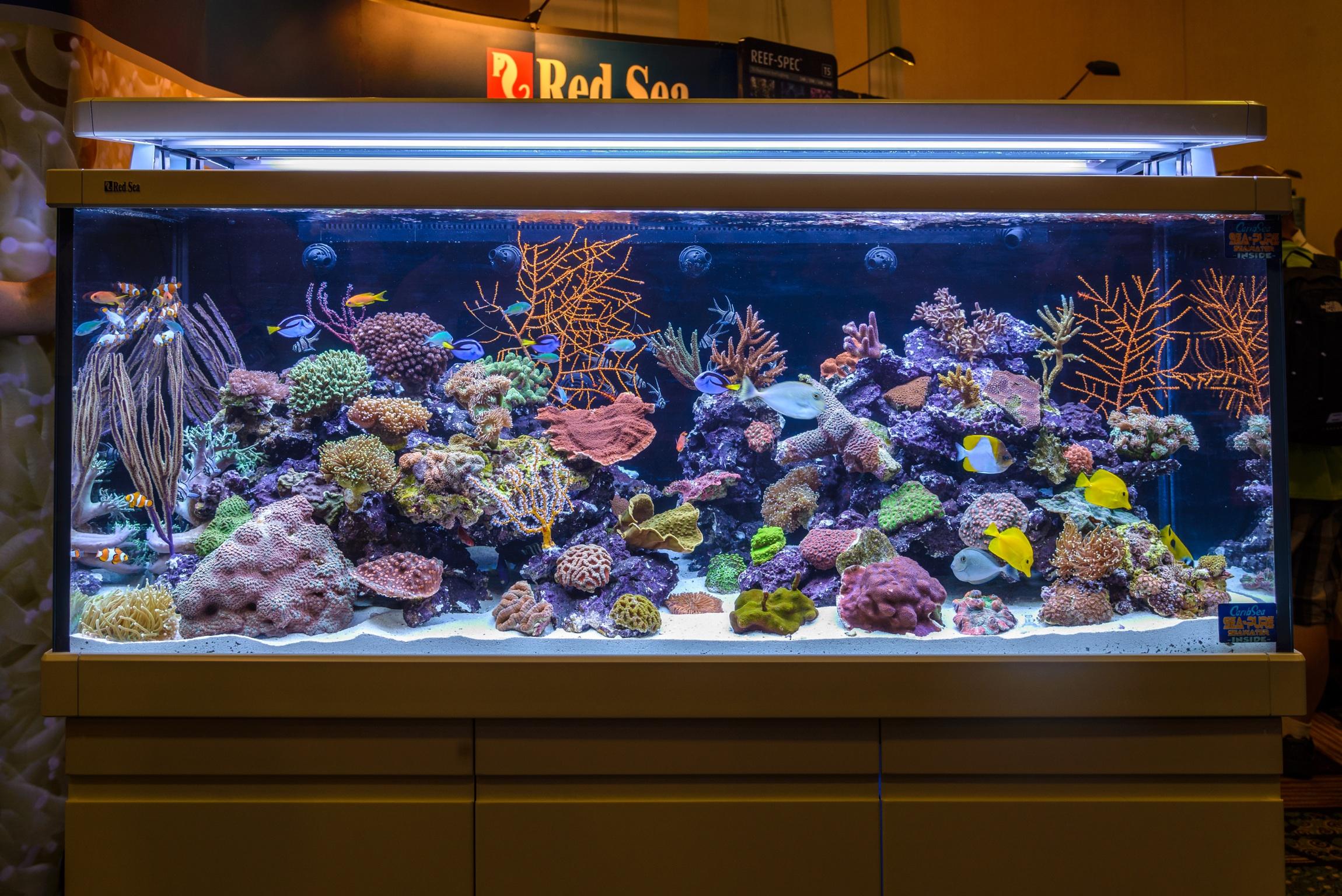 Acquario marino 200 litri casamia idea di immagine for Acquario vendesi