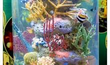 Non trovate che i documentari che trattino di acquari e barriere coralline siano deleteri?
