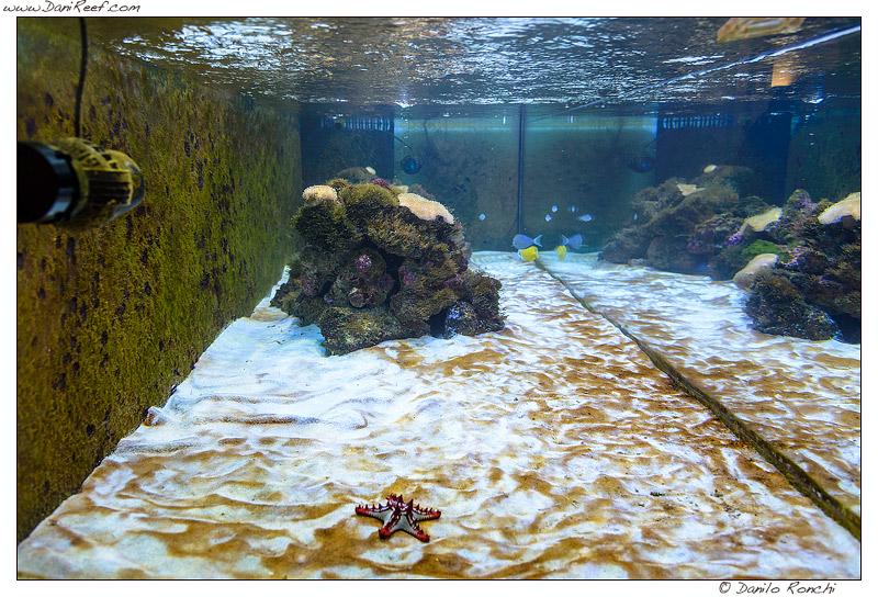 L'acquario di Fabio68