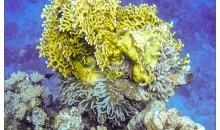 Le comunità marine si rivelano le più sensibili alla temperatura e al surriscaldamento globale