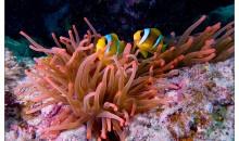 Tutti gli anemoni che si possono inserire in acquario, scopriamoli assieme