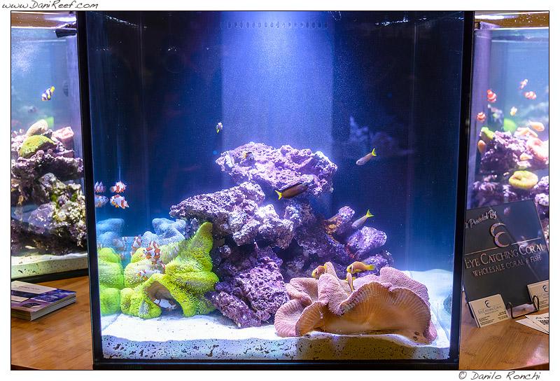 Esempio di acquario dedicato alle anemoni visto durante la fiera Macna di Ft. Lauderdale in Florida
