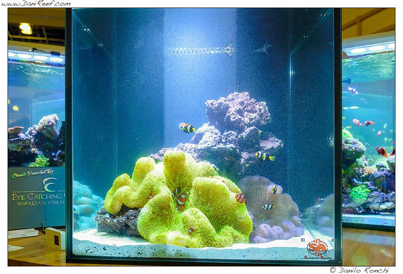 Altro splendido esempio di acquario dedicato alle anemoni visto durante la fiera Macna di Ft. Lauderdale in Florida