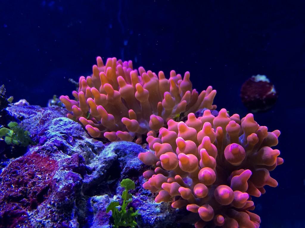 La pianificazione dell acquario marino quanti litri for Immagini coralli marini
