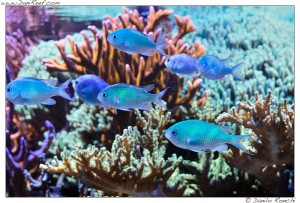 I pesci di branco devono stare in branco anche in acquario for Acquario marino 300 litri prezzo