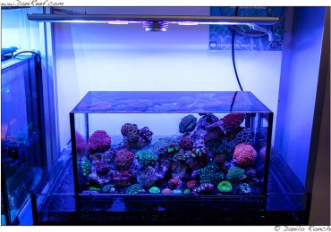 Negozio archives danireef portale dedicato all for Acquario shop online