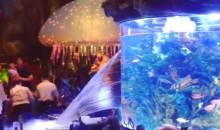 Un acquario gigante che si rompe – l'incubo di ogni acquariofilo