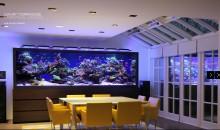 L'acquario che tutti noi vorremmo in sala da pranzo