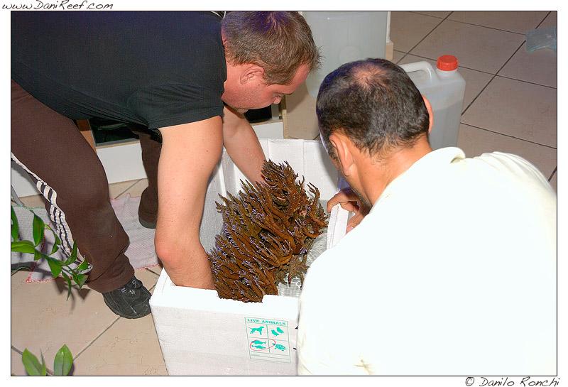 spostamento_coralli_acquario
