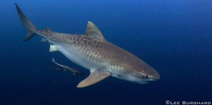 video sugli squali in alta definizione