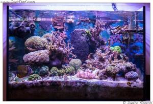L 39 acquario marino di raffaele galano e le sue fungie for Acquario marino 300 litri prezzo