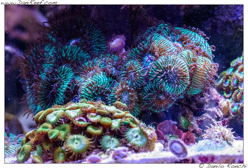 acquario marino nanoreef raffaele galano roma fungia