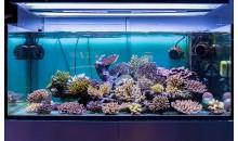 Lo splendido acquario marino di Hobby Acquari – Bologna