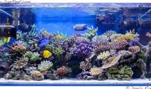 L'incredibile acquario marino di Gaetano Baiardi