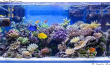 The stunning marine aquarium of Gaetano Baiardi