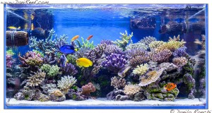 The stunning marine aquarium of gaetano baiardi for Acquario marino 300 litri prezzo