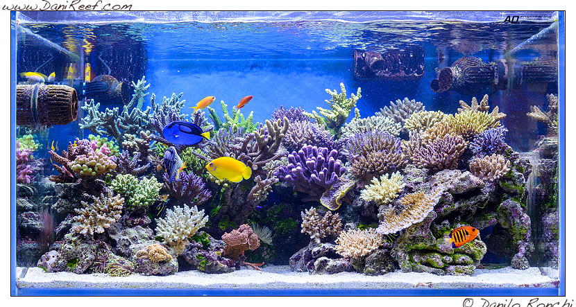 l'acquario marino di Gaetano Baiardi