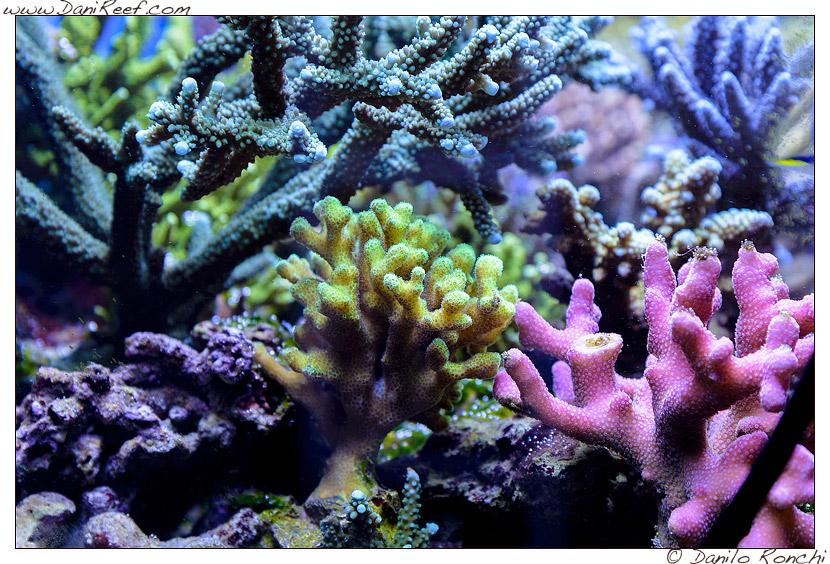 acquario marino di gaetano baiardi