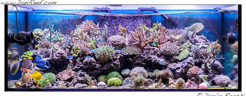 Il magnifico acquario marino di gianluca favat danireef for Acquario per pesci