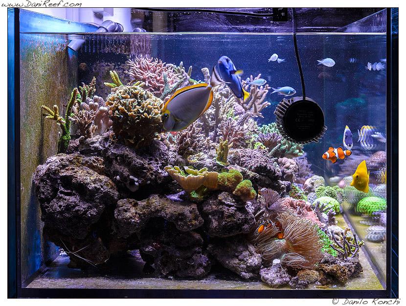 Il magnifico acquario marino di gianluca favatà danireef