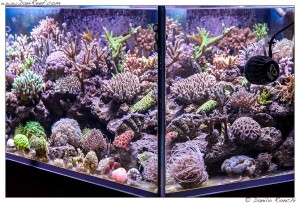 L 39 acquario marino di gianluca favat in un video in alta for Acquario marino 300 litri prezzo