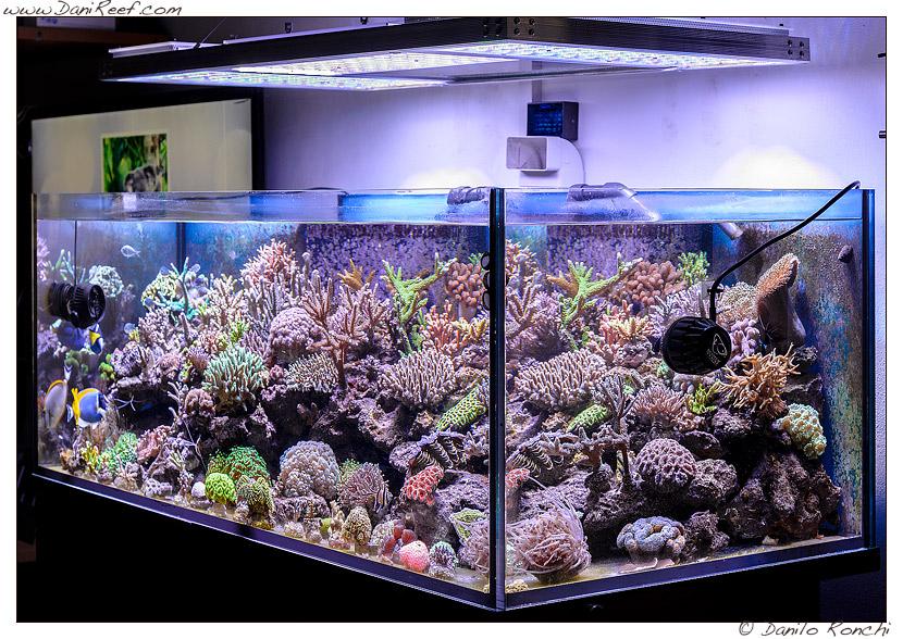 Le domande impossibili dagli amici davanti all 39 acquario for Led per acquario