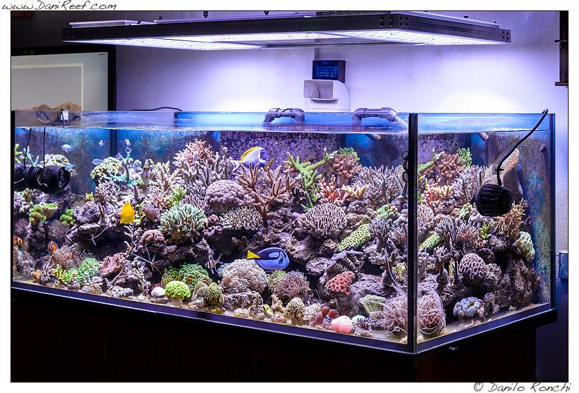 Acquario marino di Gianluca Favata