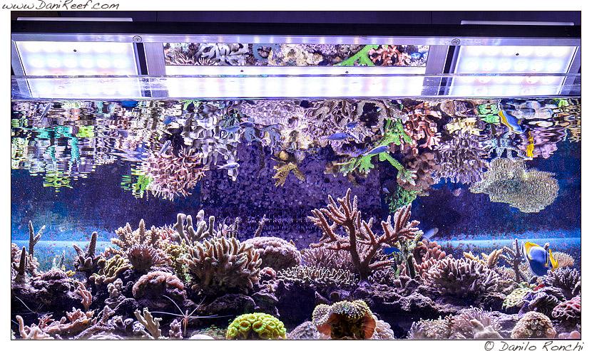 acquario marino gianluca favatà layout sps lps pesci