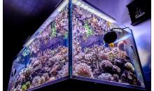 Gianluca Favatà's Fabulous Marine Aquarium