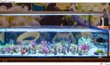 Interzoo 2014: lo stand Korallen Zucht con i suoi incredibili coralli