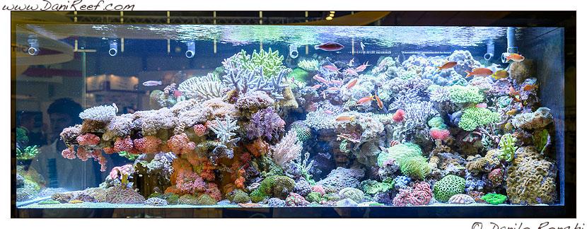 Interzoo 2014 - stand de jong marinelife - acquario di esposizione