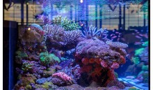 Interzoo 2014: the incredible booth of De Jong MarineLife with fish and corals