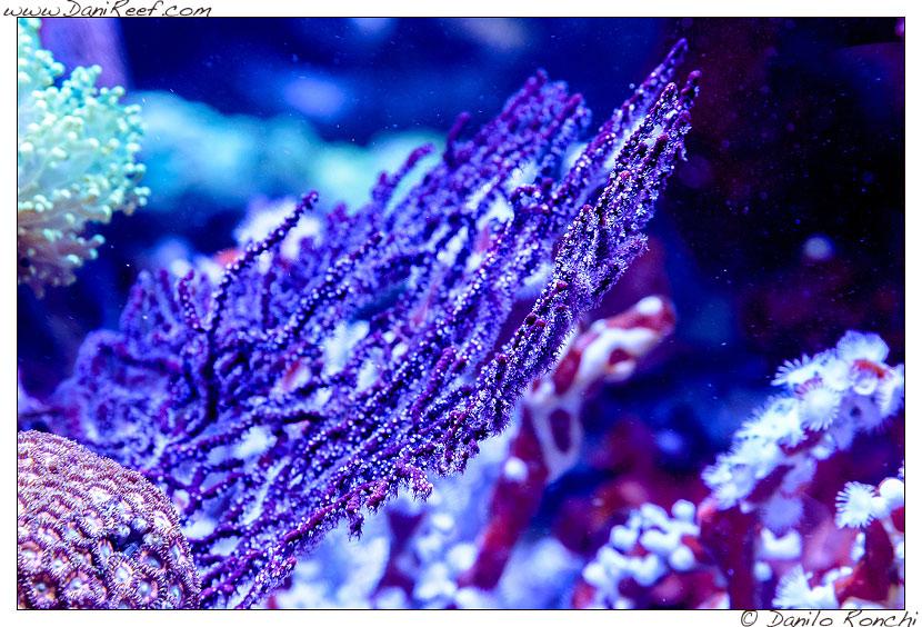 Interzoo 2014 - stand de jong marinelife - acquario di esposizione - gorgonia