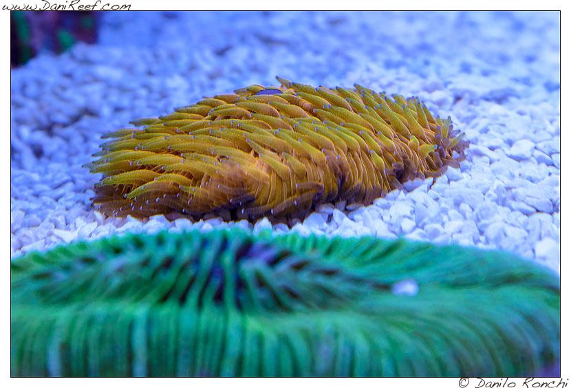 Interzoo 2014 - stand de jong marinelife - acquario di esposizione - fungia
