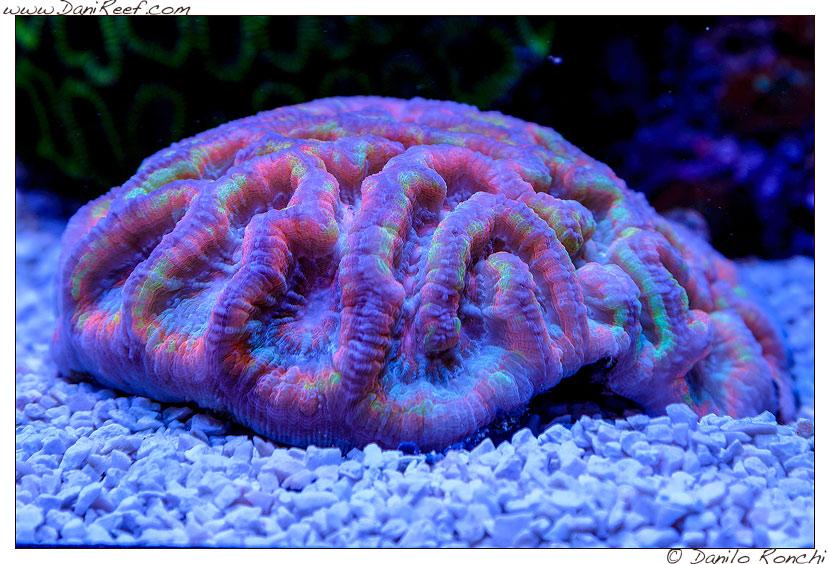 Interzoo 2014 - stand de jong marinelife - acquario di esposizione - lps