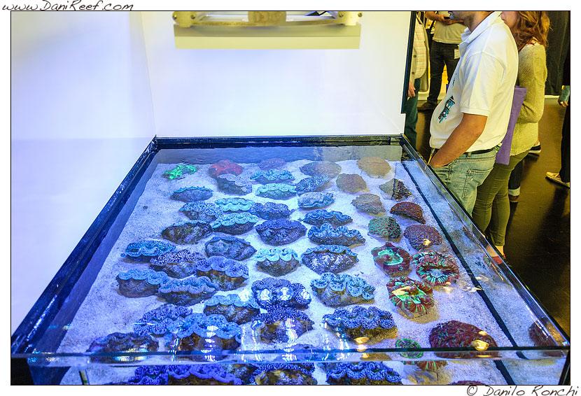 Interzoo 2014 - stand de jong marinelife - acquario di esposizione - tridacne
