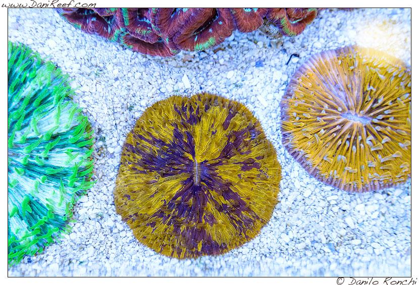 Interzoo 2014 - stand de jong marinelife - fungia