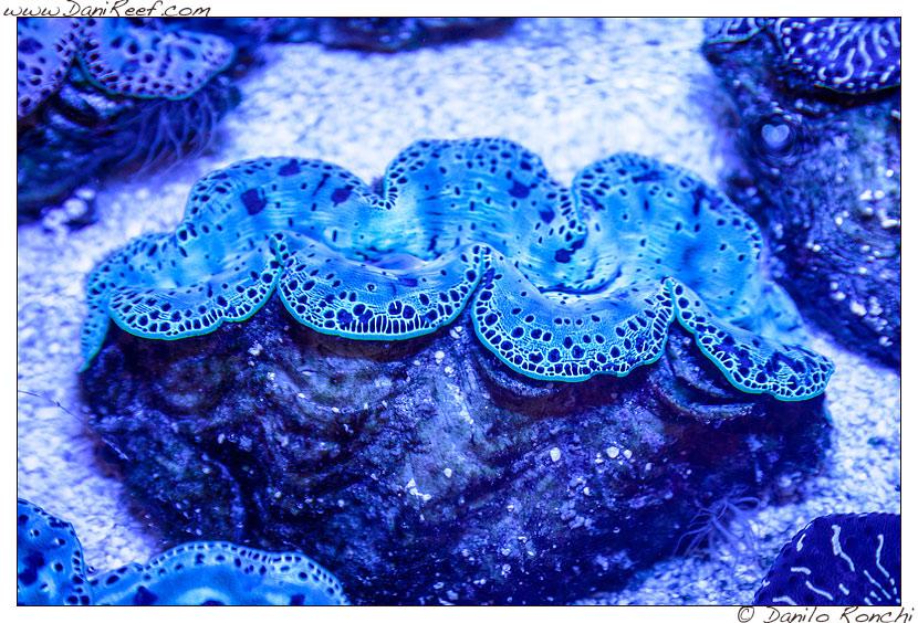 Interzoo 2014 - stand de jong marinelife - acquario di esposizione - mantelli di tridacna