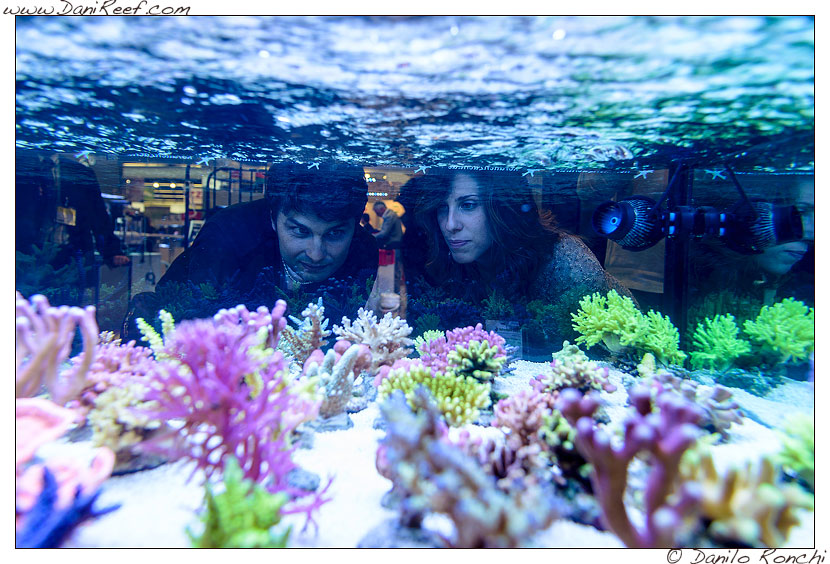 interzoo norimberga 2014 lo stand korallen zucht ed i suoi coralli - jonathan gloria