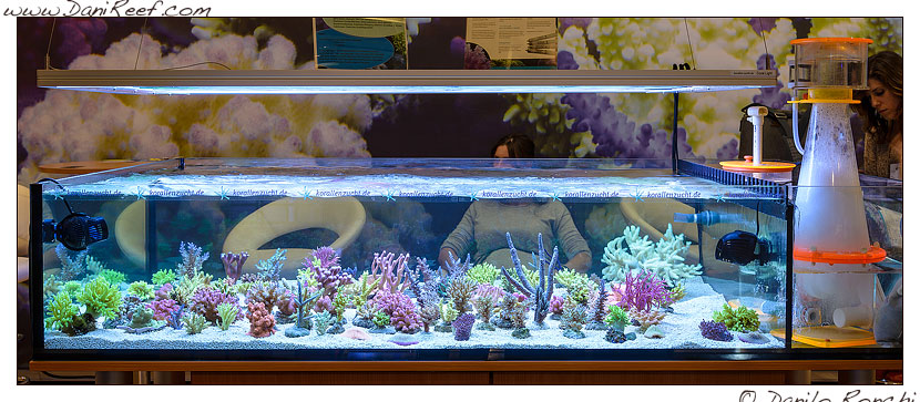 interzoo norimberga 2014 lo stand korallen zucht - i coralli